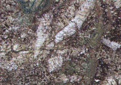 Kamarica